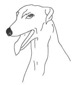 Greyhound Growly Views 81 Added Sep 01 2014 Greyhound Looking