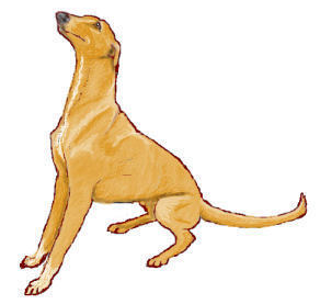 Wpclipart Com Animals Dogs G Greyhound Greyhound Fawn Begging Png Html