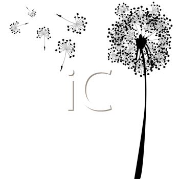 Dandelion And Seeds In Silhouette As A Wish Is Made   Royalty Free