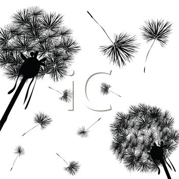 Dandelion Wishy Blows In Silhouette  Make A Wish   Royalty Free Clip