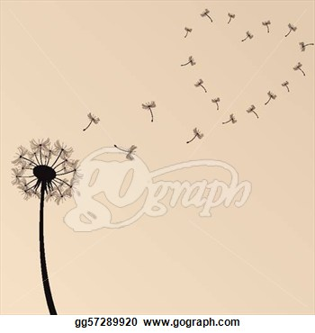Eps Vector   Dandelion Illustration  Stock Clipart Illustration