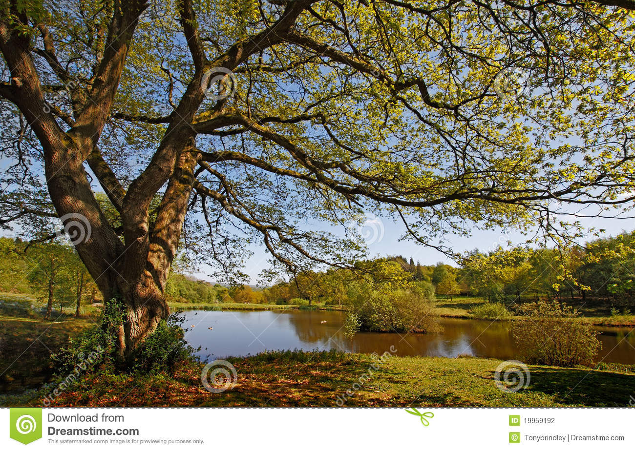Beautifully Managed Yet Natural Area Of Countryside In