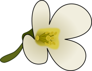 Dogwood Flower Clip Art   Clipart Best