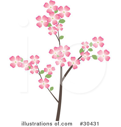 Dogwood Flower Clip Art Pictures