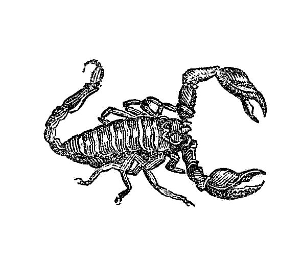 Antique Images  Insect Clip Art  2 Graphic Designs Of Scorpions