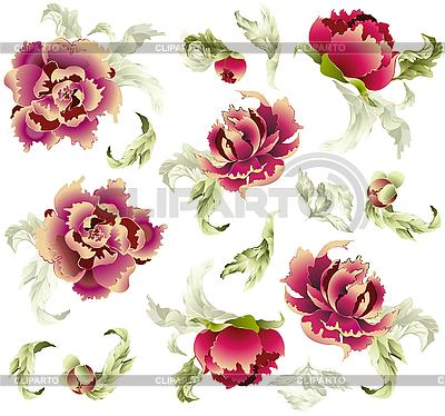 Background With Peony   Stock Vector Graphics   Cliparto