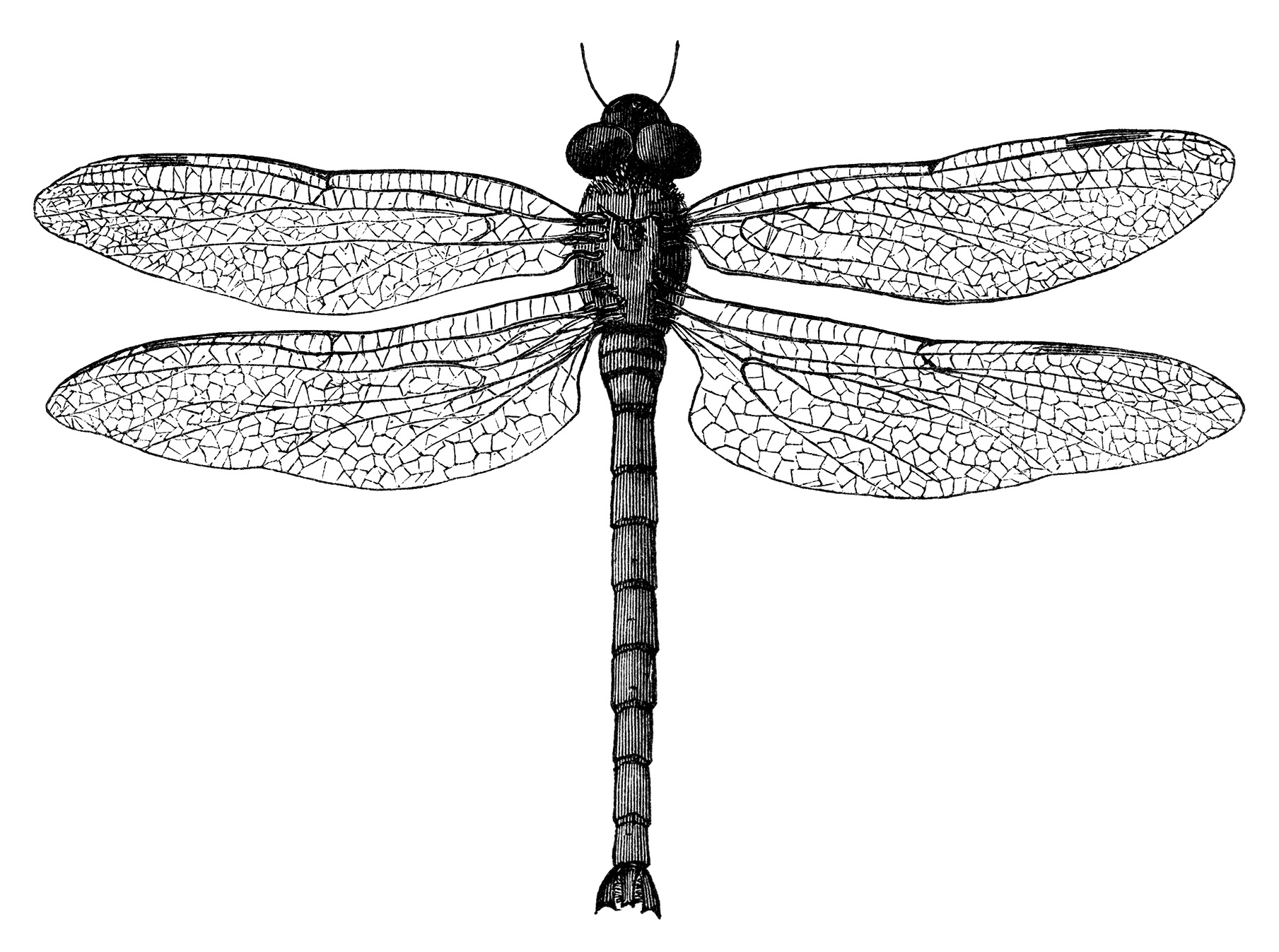 Black And White Clip Art Vintage Dragonfly Clipart Digital Stamp