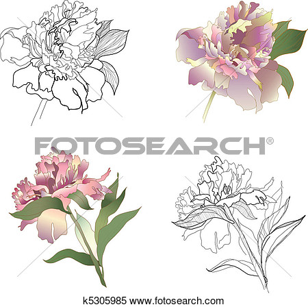 Clipart   Peony Set  Fotosearch   Search Clip Art Illustration Murals