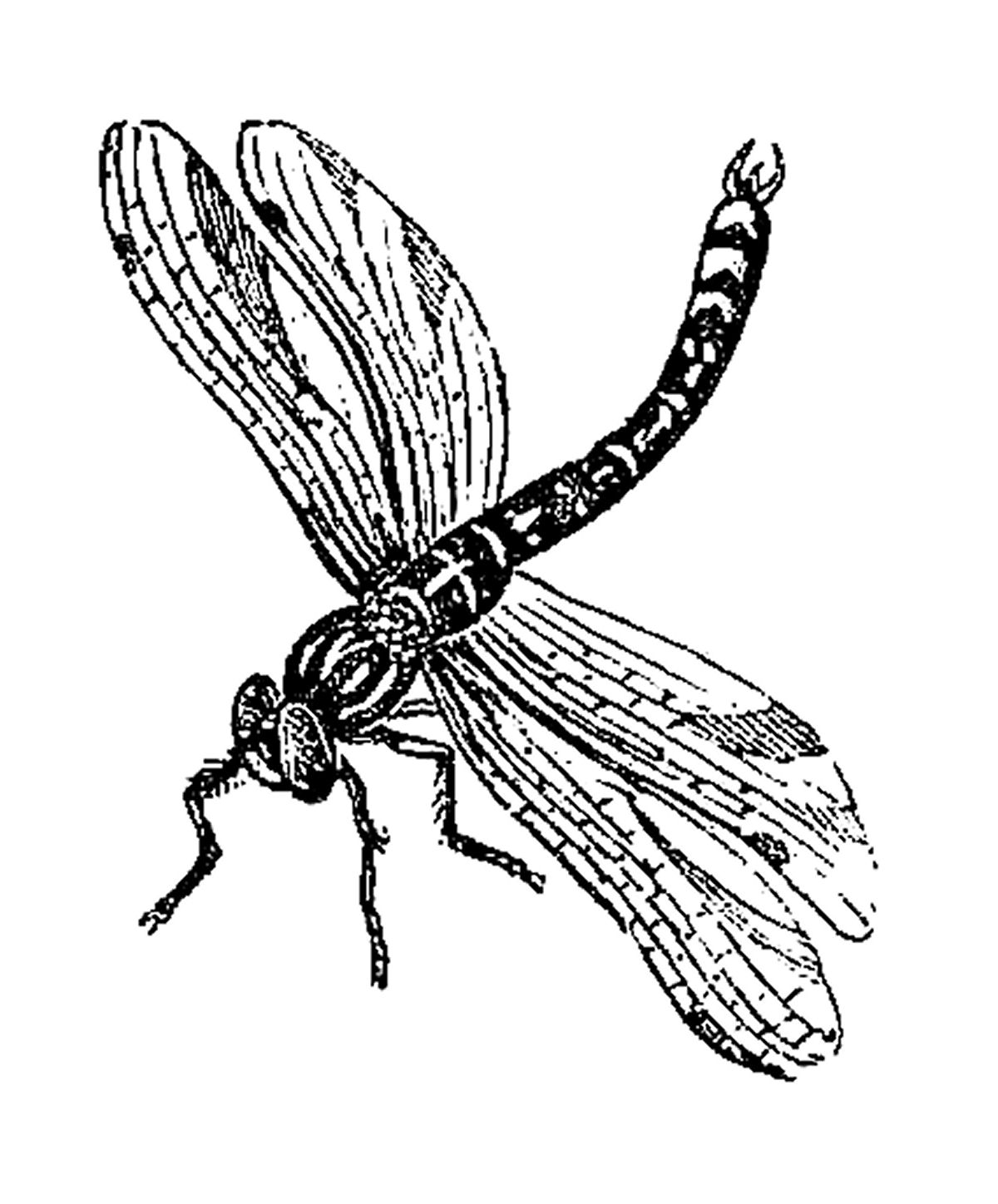 Image Transfer Design  2 Insect Clip Art Of Dragonfly And Queen Bee