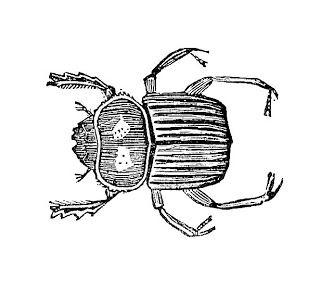 Images  Vintage Insect Clip Art  Graphic Design Of Beetle From Vintage