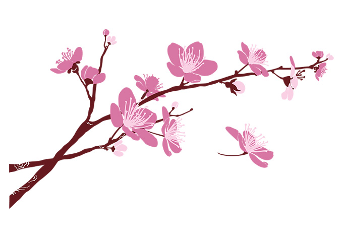 Cherry Blossom Clipart - Clipart Kid