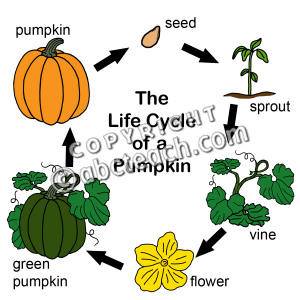 Pumpkin Sprout Clipart Images   Pictures   Becuo