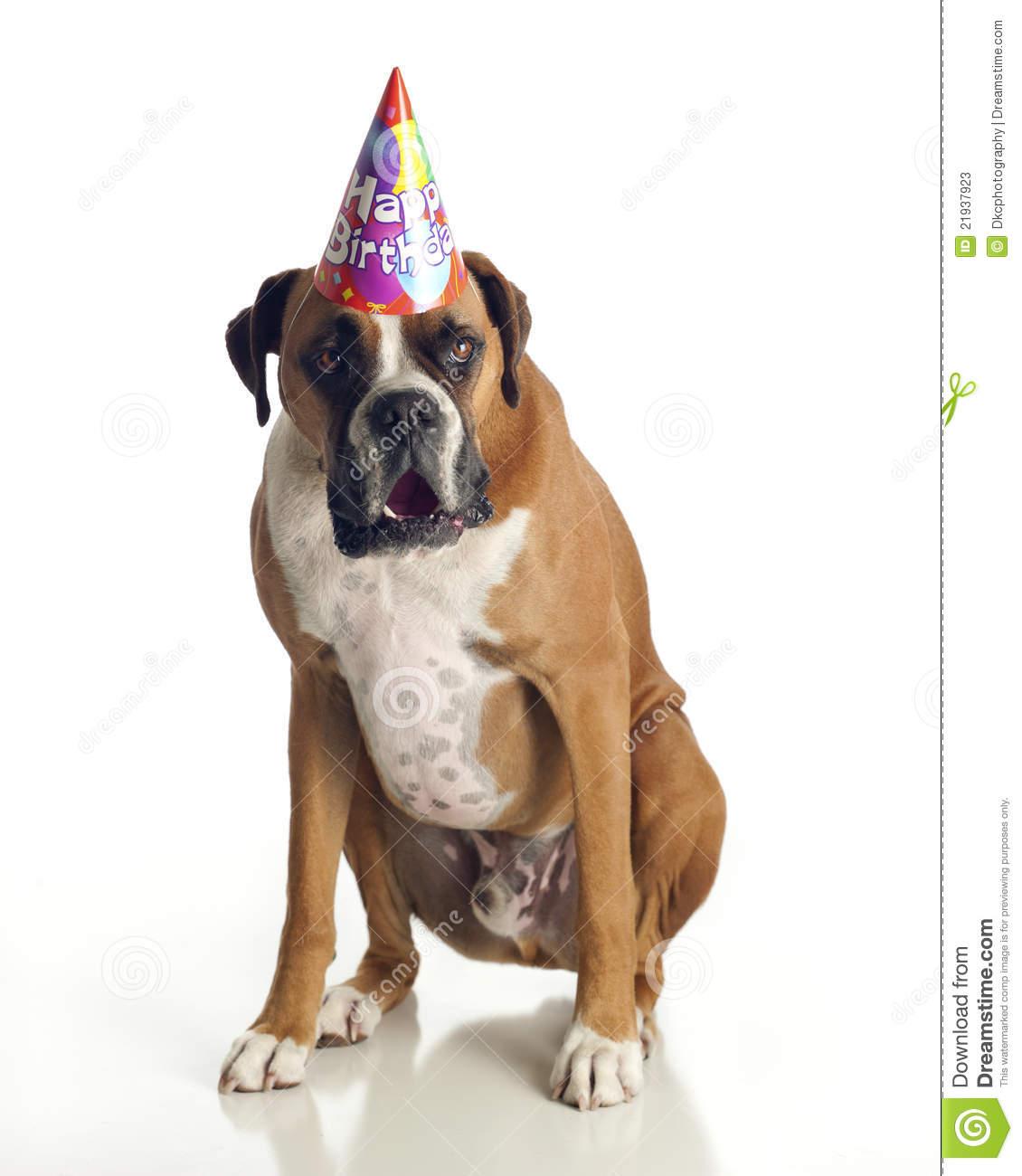 Dog Birthday Clipart Boxer Dog Birthday