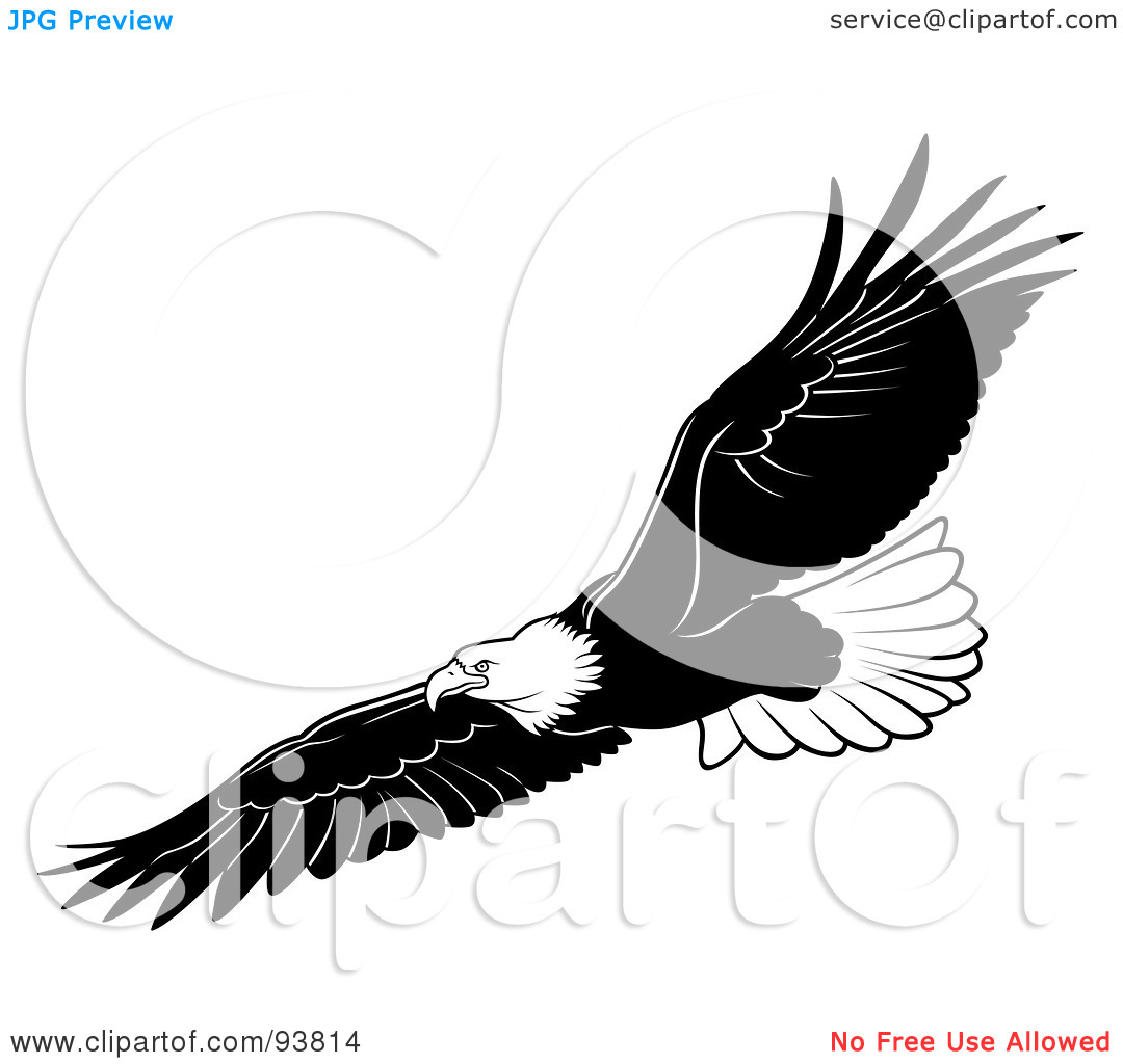 Bald Eagle Black And White Clipart - Clipart Suggest