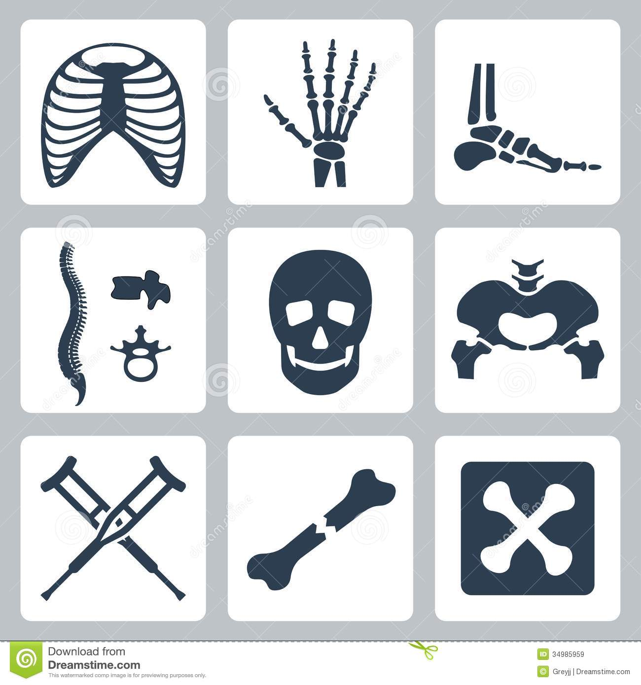 Vector Skeleton Icons Set Royalty Free Stock Images   Image  34985959
