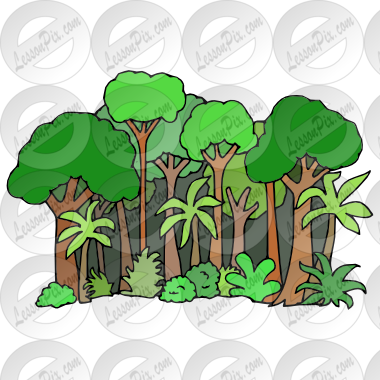 Picture For Classroom   Therapy Use   Great Rainforest Clipart