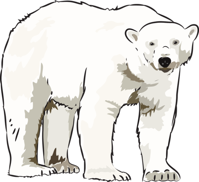 Art Polar Bear Clipart - Clipart Kid