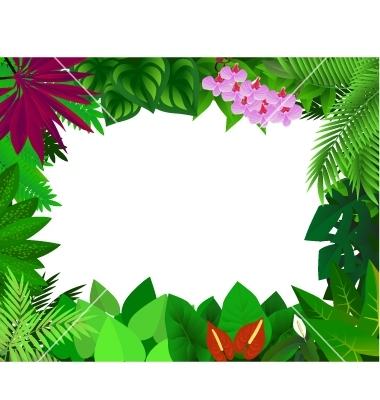 Rainforest Background Clipart Rainforest Background