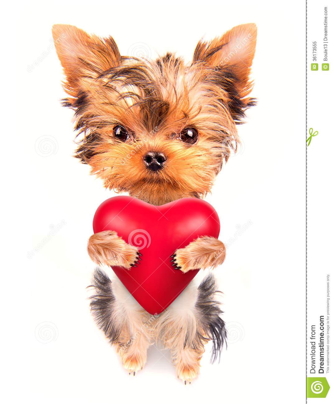 valentine puppy clipart - photo #40