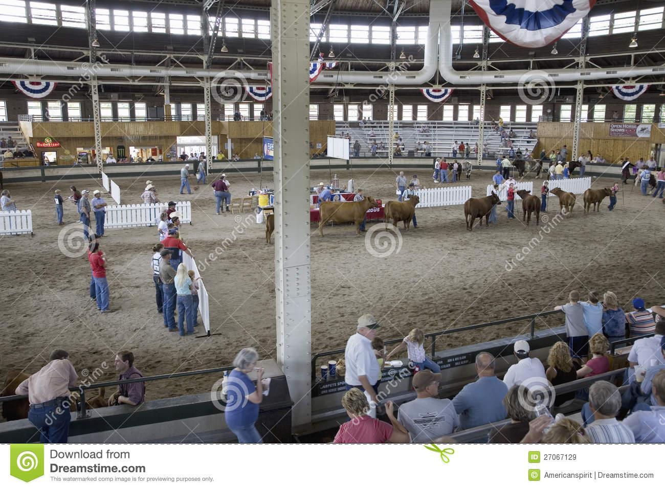 Cattle Contest At Iowa State Fair Des Moines Iowa August 2007