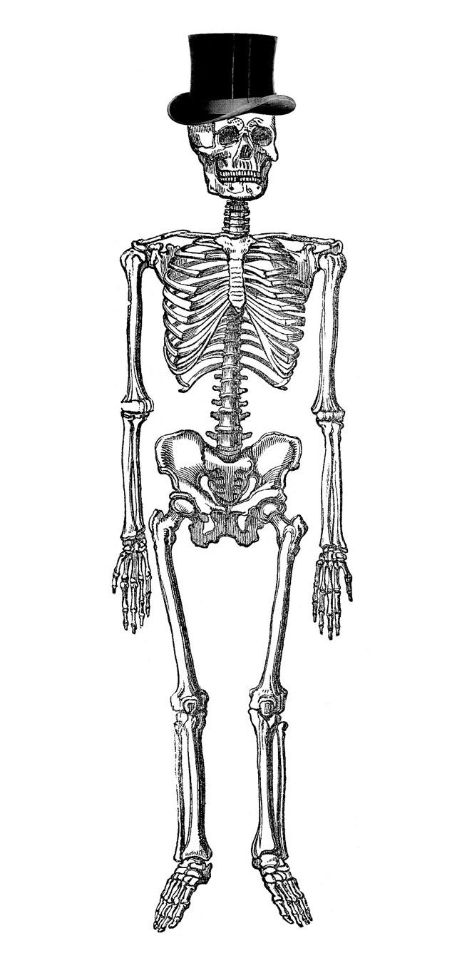 Vintage Halloween Clip Art   Fancy Skeleton Man   The Graphics Fairy