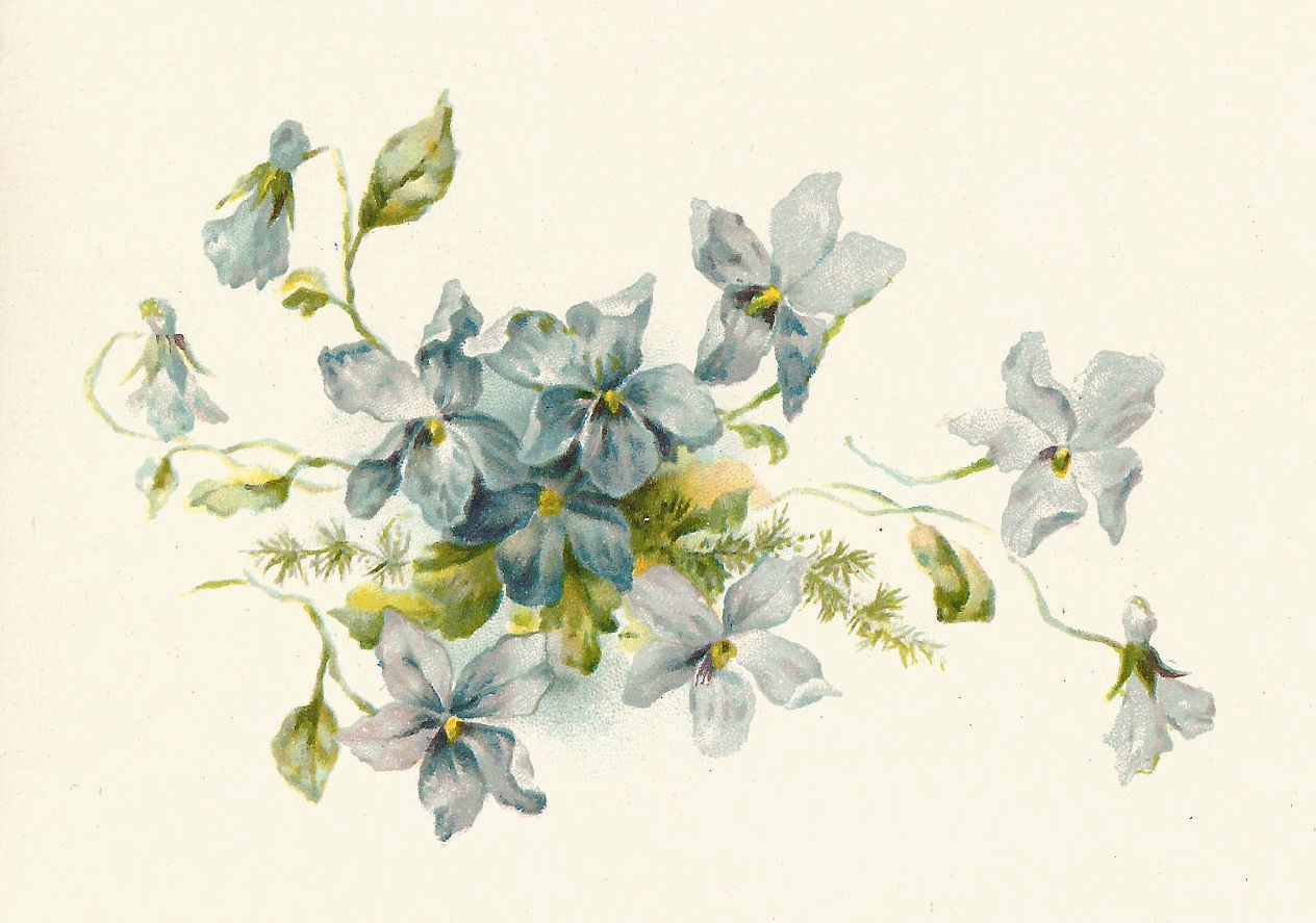 Art  Vintage Illustration Of A Bunch Of Blue Forget Me Not Flowers