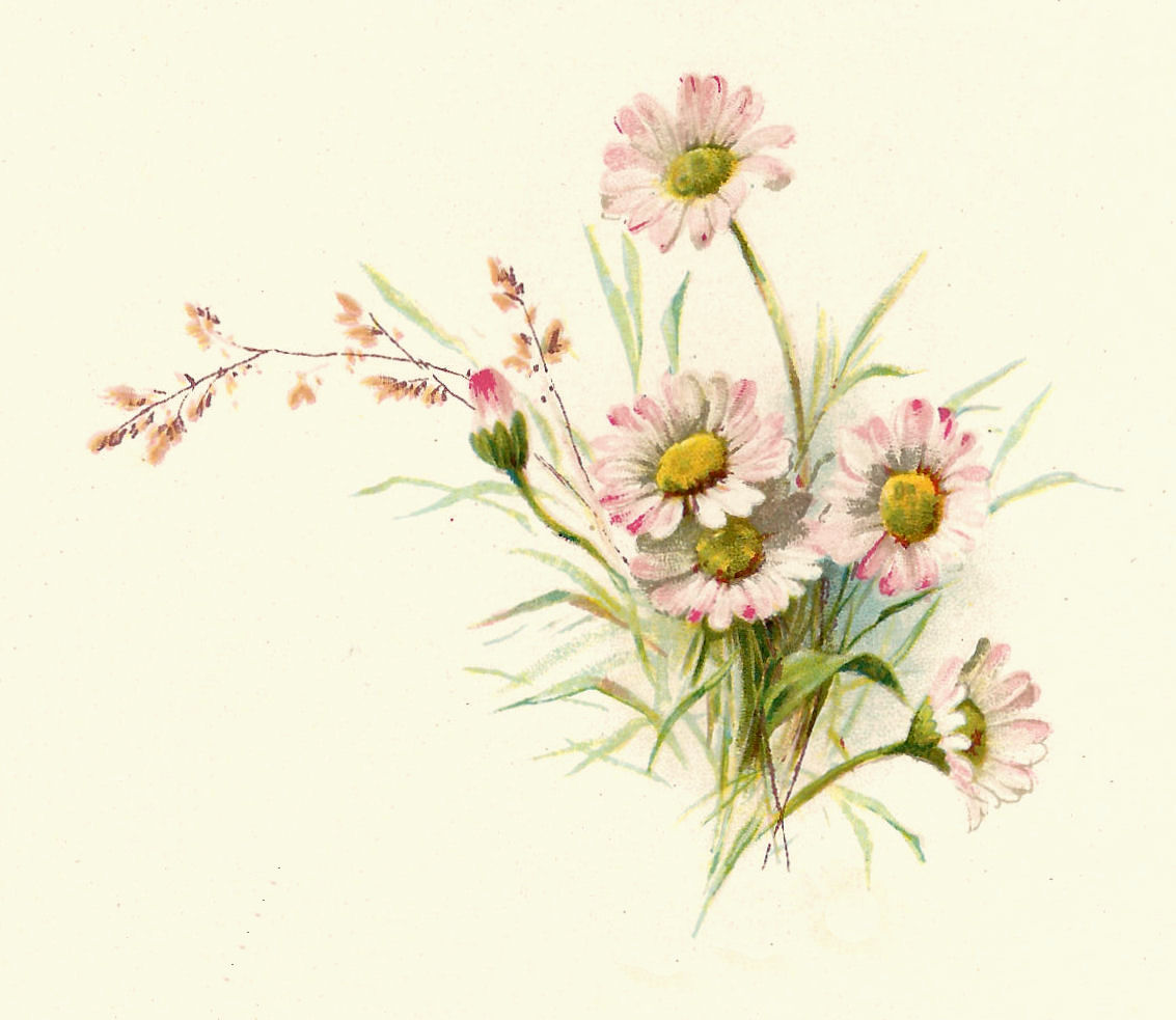 Free Flower Graphic  Vintage Pink Daisy Clip Art And Poem From Wedding