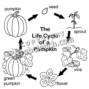 Pumpkin life cycle clipart clipart suggest for Pumpkin seed coloring page