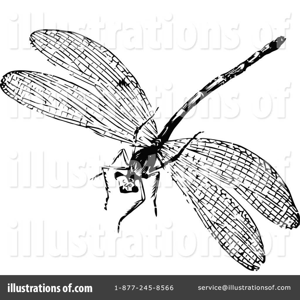 Dragonfly Clipart  1113191 By Prawny Vintage   Royalty Free  Rf  Stock