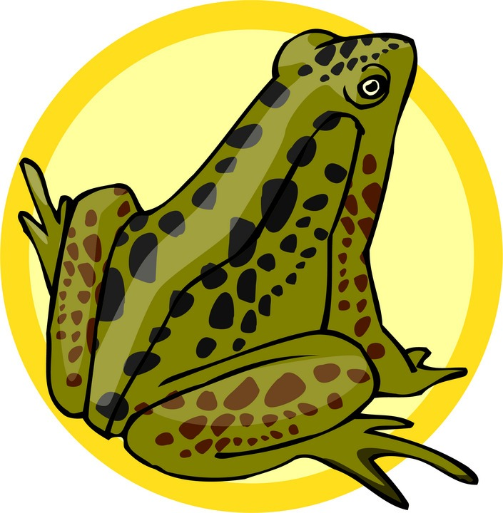 Adult Frog Clipart Frog In Sunlight