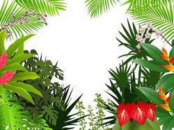 Tropical Forest Background Stock Vector