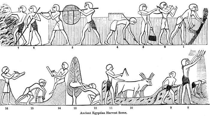 Ancient Egyptian Harvest Scene