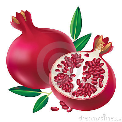 Clip Art Pomegranate Clipart pomegranate clipart kid illustration of fruit and sliced half isolated on