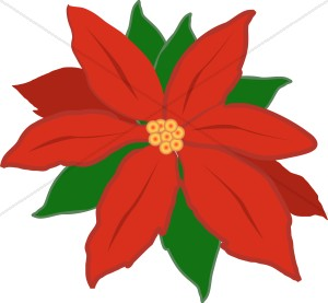 Image result for poinsettia clip art