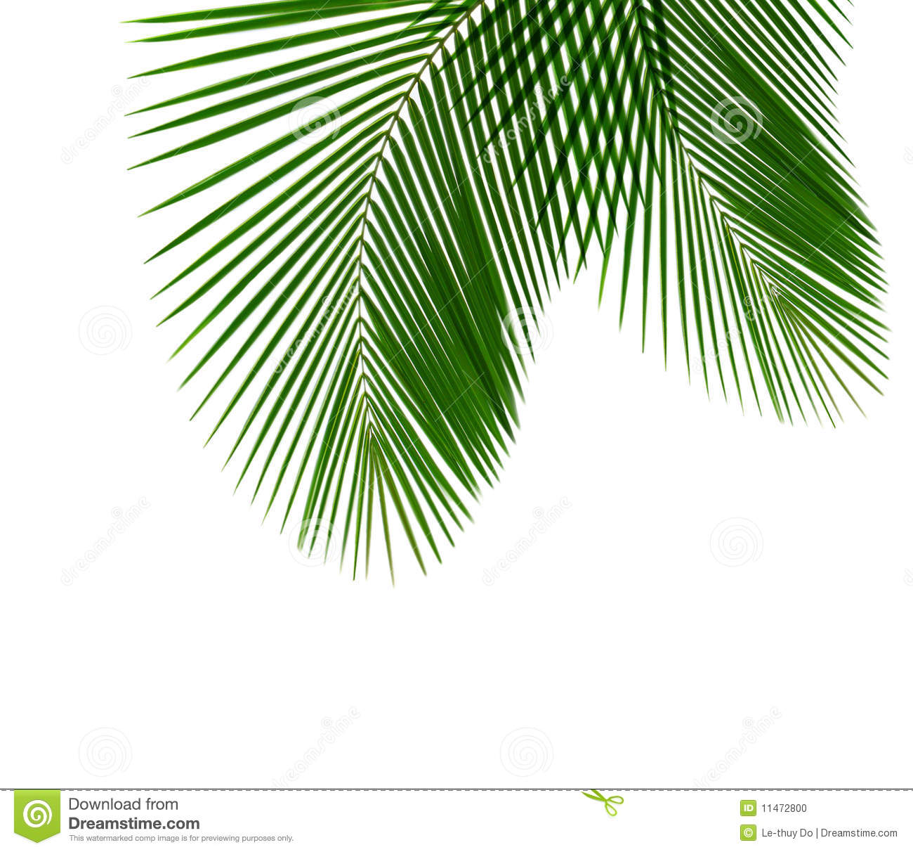 Single Palm Leaf Clipart - Clipart Suggest