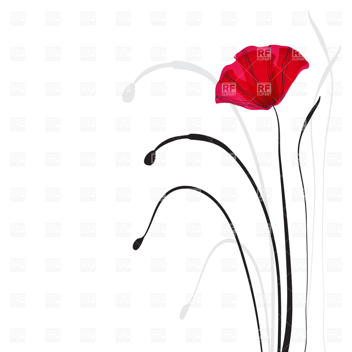 Red Poppy And Black Stems 23145 Plants And Animals Download Royalty