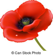 Red Poppy Isolated On White Background Vector Illustration