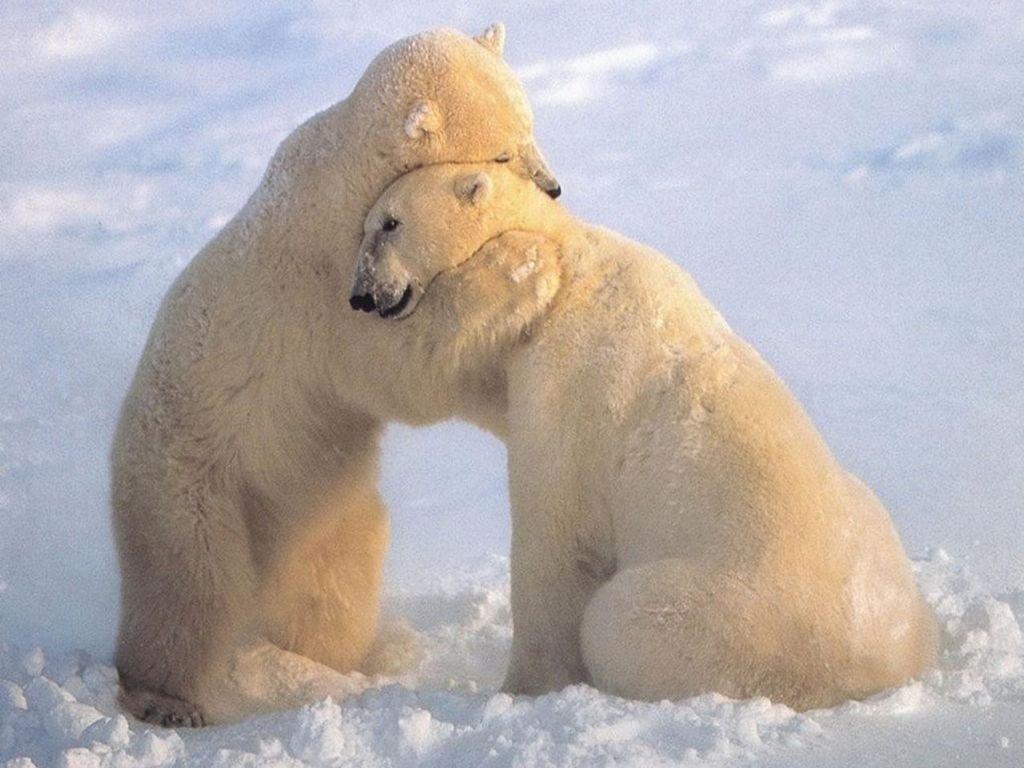 the-power-of-a-hug-suzette-brawner-3LAU4
