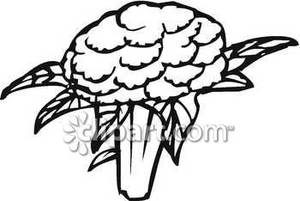 Black And White Broccoli Floret Royalty Free Clipart Picture 090408