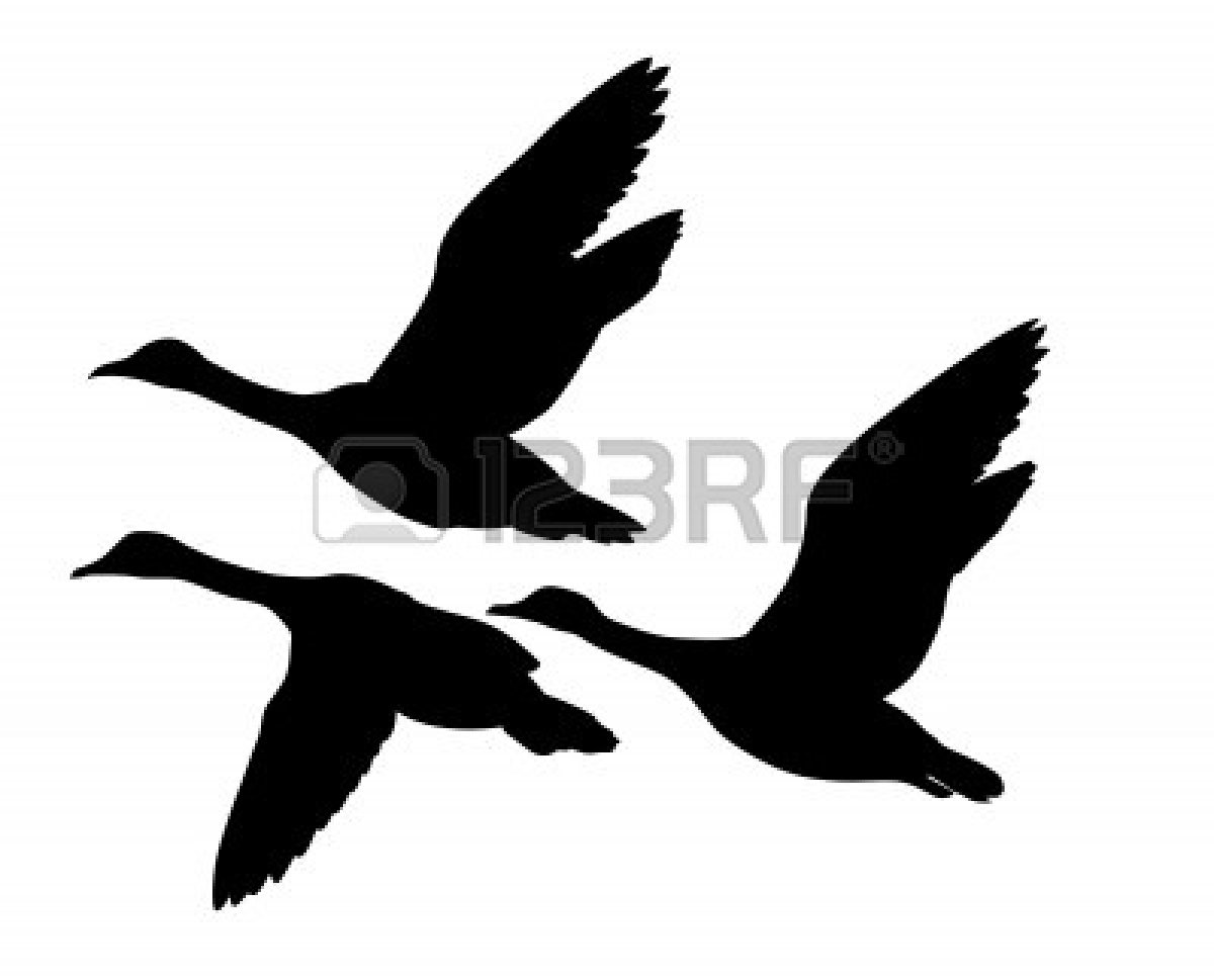 Flying Duck Silhouette   Clipart Panda   Free Clipart Images