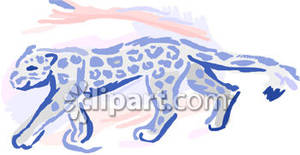 Snow Leopard Cup Walking   Royalty Free Clipart Picture