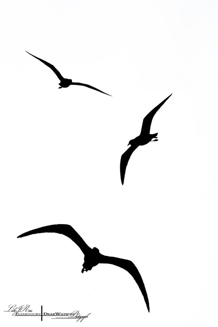 Flying Bird Silhouette Clipart - Clipart Kid Eagle Silhouette Vector