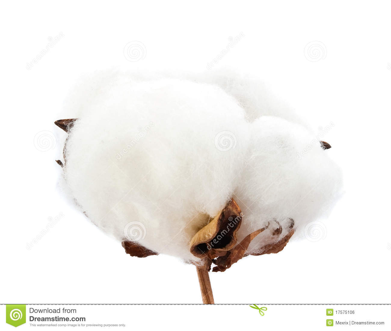 Cotton Royalty Free Stock Image   Image  17575106