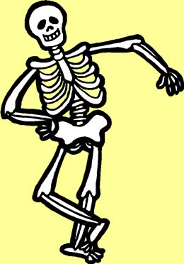 Skeletal System Clipart - Clipart Kid