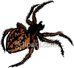 Fat Hairy Brown Spider   Royalty Free Clipart Picture