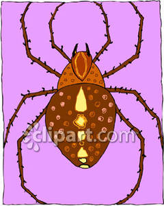 Hairy Brown Spider   Royalty Free Clipart Picture