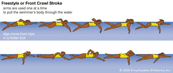 Freestyle Stroke Clipart - Clipart Kid