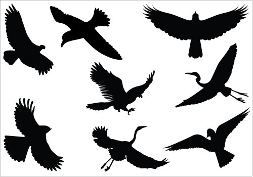 Aninimal Book: Sparrow Silhouette Clipart - Clipart Suggest