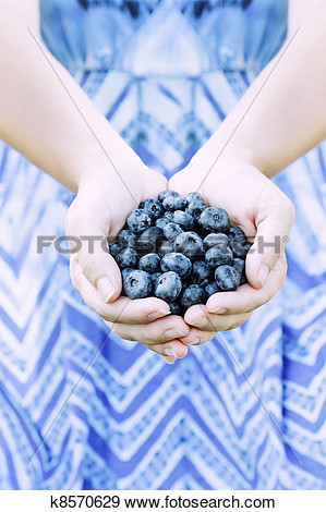 Stock Photograph Of Woman Hands Offering Blueberries K8570629   Search