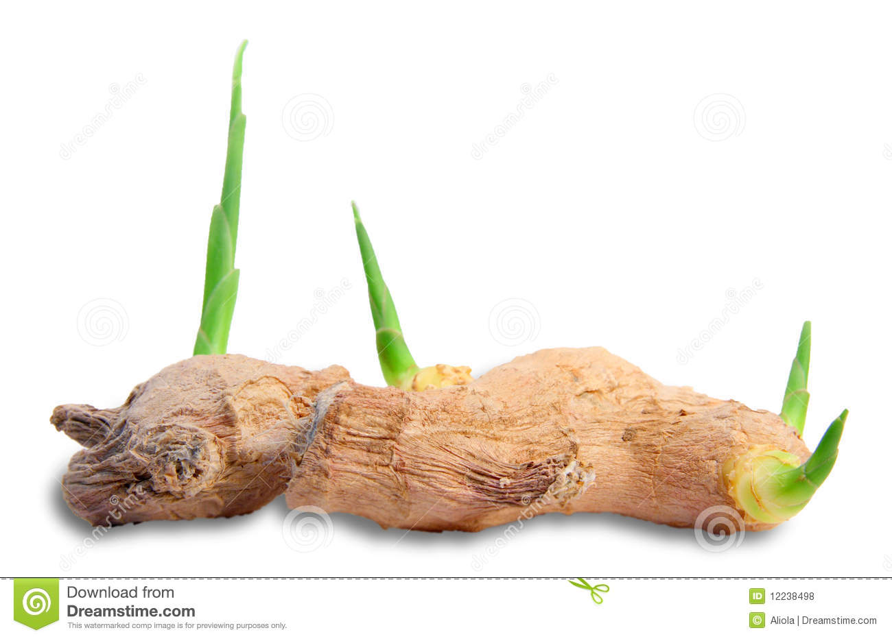 Ginger Root Royalty Free Stock Photos   Image  12238498